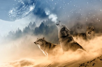 wolves-1400819_1280
