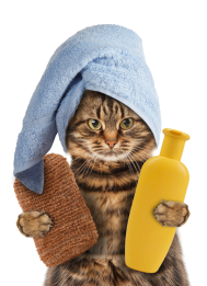 kisspng-cat-towel-kitten-pet-polyester-take-shower-gel-kitten-5a7d487ddfa2f0.215991251518159997916