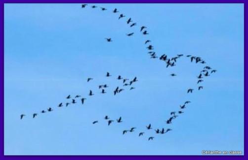 poèmes oiseaux idées d'illustration 1