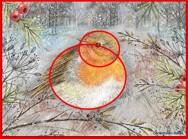 poèmes oiseaux idées d'illustration 5