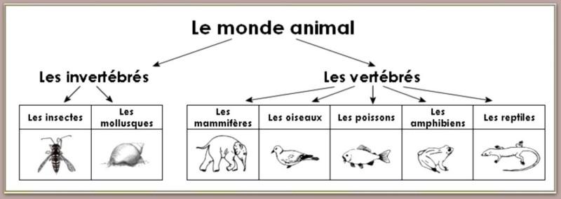 cartes critères classnt animaux 5