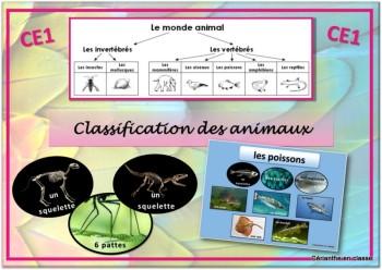 classification des animaux présentation 1