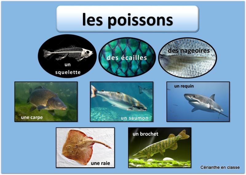 classification des animaux présentation 2