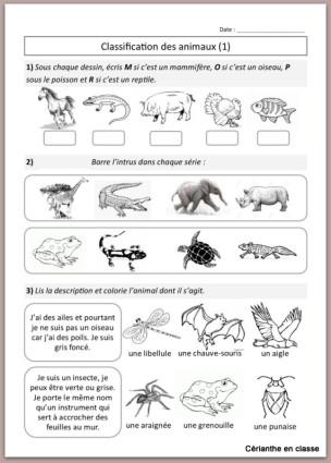 fiches d'ex classification des animaux 1