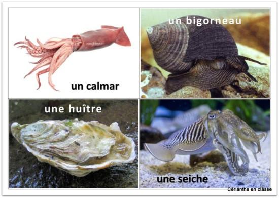 img mollusques