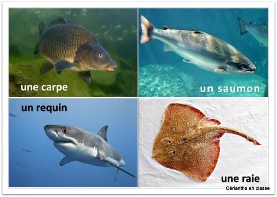 img poissons