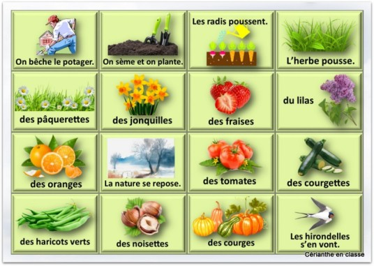 jeu du printemps cartes végétaux